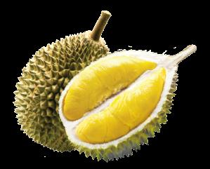 durian-yohanes-chandra-ekajaya