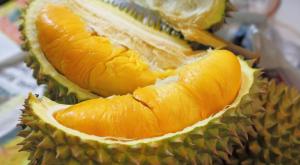 yohanes-chandra-ekajaya-durian